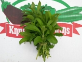 herb12